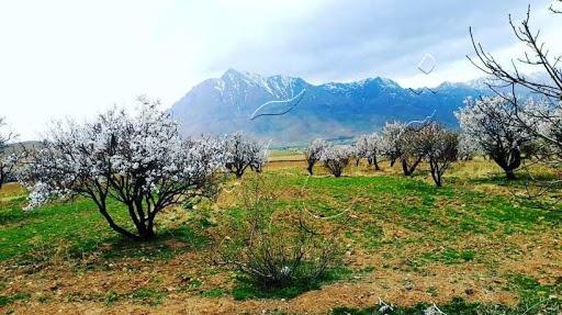 روستای شمس آباد تخت