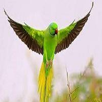 پرنده طوطی