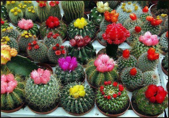 پرورش گل و گیاهان زینتی
